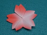 五角形簡単さくら4