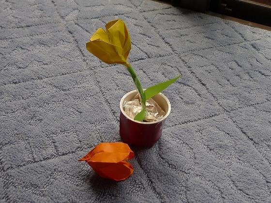 チューリップの植木鉢